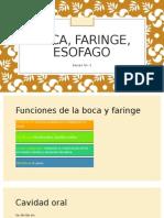 Boca, Faringe, Esofago