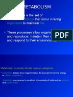 metabolisme-pp.ppt