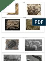 ltm 612 geologic organisms