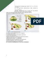 Ginecologia Libro 2