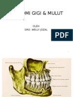 Anatomi Gigi & Mulut