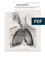 Sistema Respiratorio Anatomia