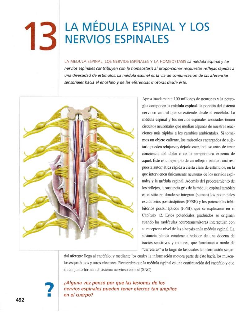Contemporáneo Describir La Anatomía De La Médula Espinal Foto ...