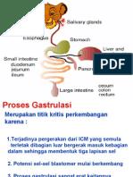 Tractus Digestoria