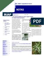 Las Plantas purificadoras del aire según la NASA