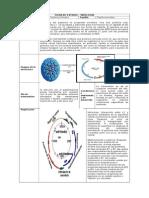 FICHA DE ESTUDIO _ VIROLOGIA_VPH.docx