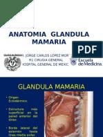 anatomiaglandulamamaria-121009003706-phpapp01