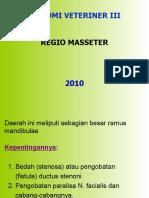 REGIO MASSETER