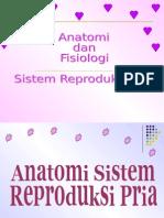 Anatomi fisiologi sistem reproduksi laki2.ppt