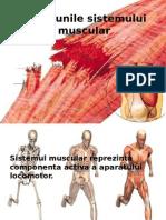 Afectiunile Sistemului Muscular