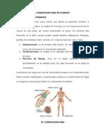 Condrosarcoma de Humano
