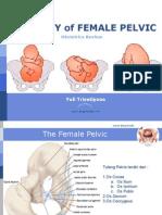 Anatomi Pelvis Obstetri