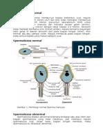 Spermatozoa Normal