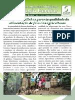ExpAgroecologicas_BaixoSul_galinhas