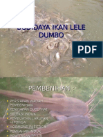 Budidaya Ikan Lele Dumbo