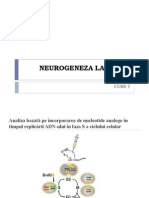 Curs 7 Neuro Bio
