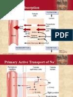 Procesamiento Tubular Renal contracorriente
