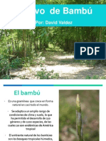 02 David Valdez El Cultivo Del Bambú