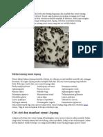 Manfaat Semut Jepang.docx
