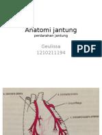 Anatomi Jantung (Perdarahan)
