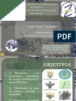 2752 Observacion de Estructuras de Los Hongos