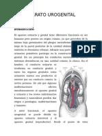 Informe de Embrio Uro