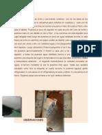 ecologia reporte desarrollo y observaciones.docx