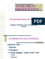 Anatomi Genitalia Dr Devi