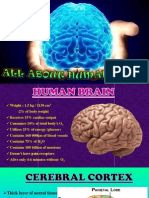 All About Human Brain