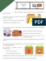 Ficha Formativa IV