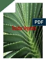 Aula 4 e 5-TECIDOS VEGETAIS [Modo de Compatibilidade].pdf