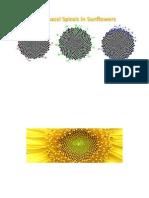 Sunflower Fibonnaci