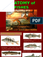 3-Anatomy of Fishes by Lk