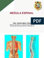 2.- MÉDULA ESPINAL