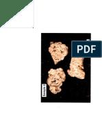 Petrography Limestone 4
