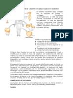 Clasificacion Fractura