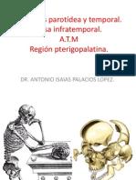 Fosas y Región Parotidea