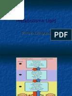 Presentasi Metabolisme Lipid