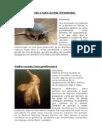 4 animales peruanos en peligro de extinción