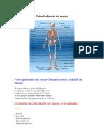 Todos los huesos del cuerpo.docx