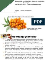 Plante Medicinale-Gimbir Oana