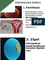 perkembangan embrio