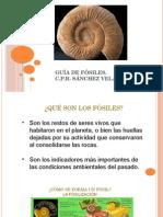 Guía de Fósiles