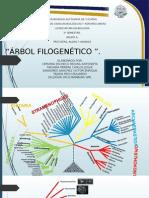 Arbol Filogenetico PRotistas