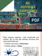 Sistema Nervioso Rodrigo Kine
