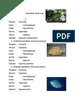 5 Jenis Ikan Herbivora