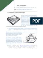 Evaluación i Fase-ecologia Kevin Olazabal Paredes