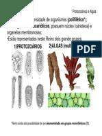 Bio Ens Med 9 Parte 1 Protozooarios