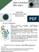 Produksi Enzim α-Amylase oleh Aspergillus niger