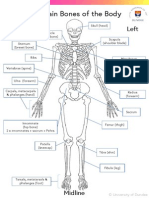 Learning the Main Bones of the Body